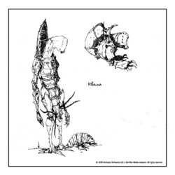 Квама (концепт-арт TES III)