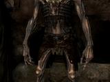 Draugr (Skyrim)