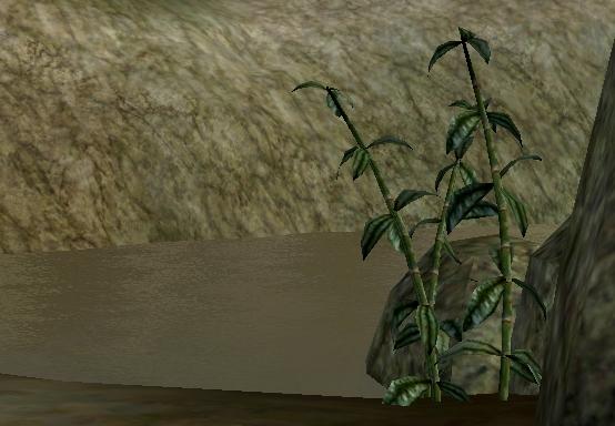 Gathering Marshmerrow