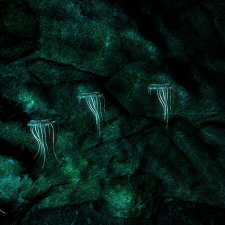 Glowing mushrooms individual.jpg