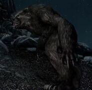 Skyrim Werebear