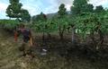 Tamika's Vineyards Shameer working