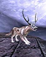Hircine Wolf Form