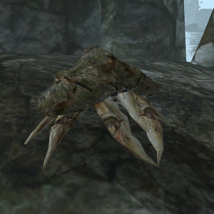 Крабовое мясо (Morrowind)