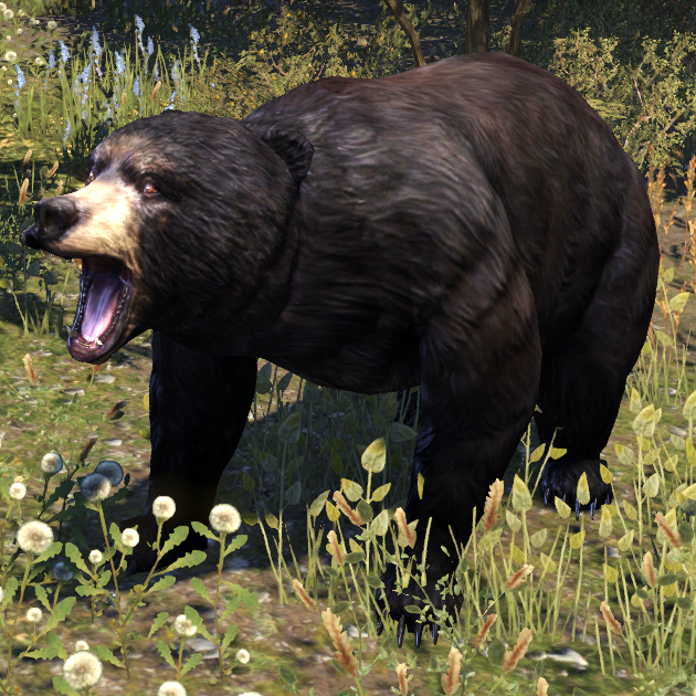 Black Bear (Online)