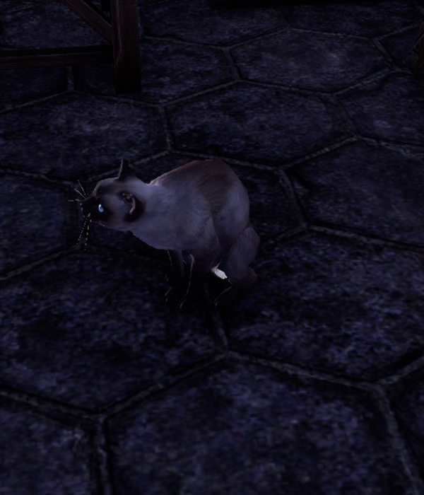 Moonstone (Cat)