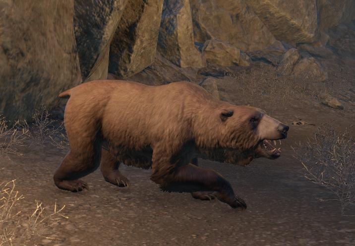 Brown Bear (Online)