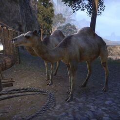 Верблюд (Online).jpg