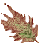 Лист сонного папоротника (иконка).png