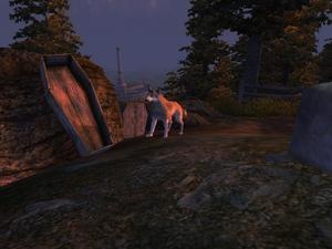 Лесной волк (Oblivion) 2