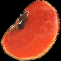 Шляпка красного пикнопоруса.png