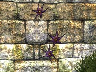 Цветок астры (растение)