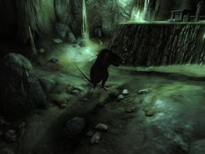 Крыса (Oblivion) 2