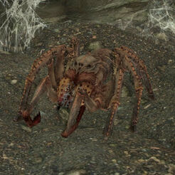 Ручной паук Бабетты.jpg