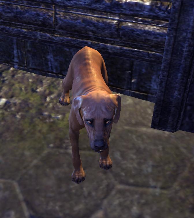Horker (Dog)