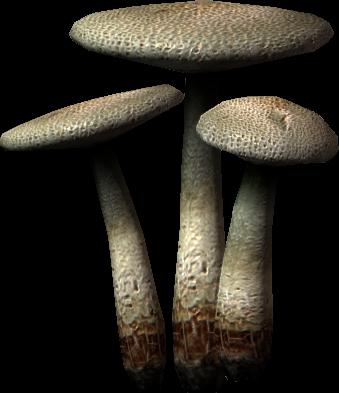 Fungo bianco (Skyrim)
