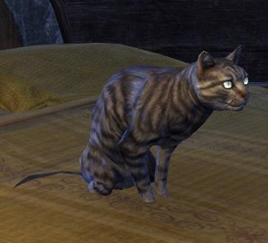 Phynaster (Cat)