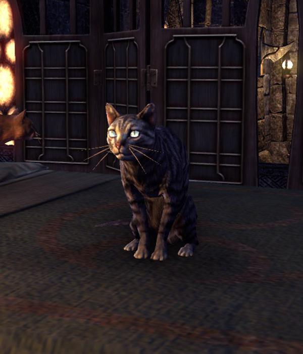 Sheogorath (Cat)