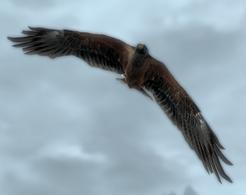 Hawk.png