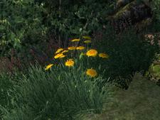 Желтый лен