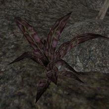 Растение вредозобник (TES III) 02.jpg