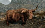 Krowa 3 (Skyrim)