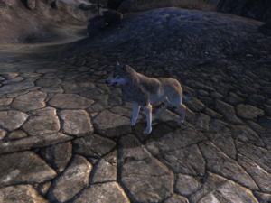 Волк (Oblivion) 1