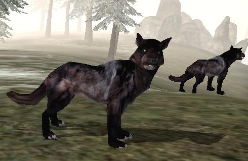 Wilk (Morrowind)