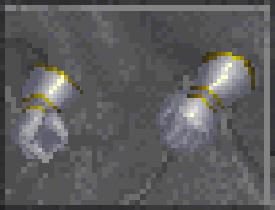 Chain Gauntlets (Daggerfall)