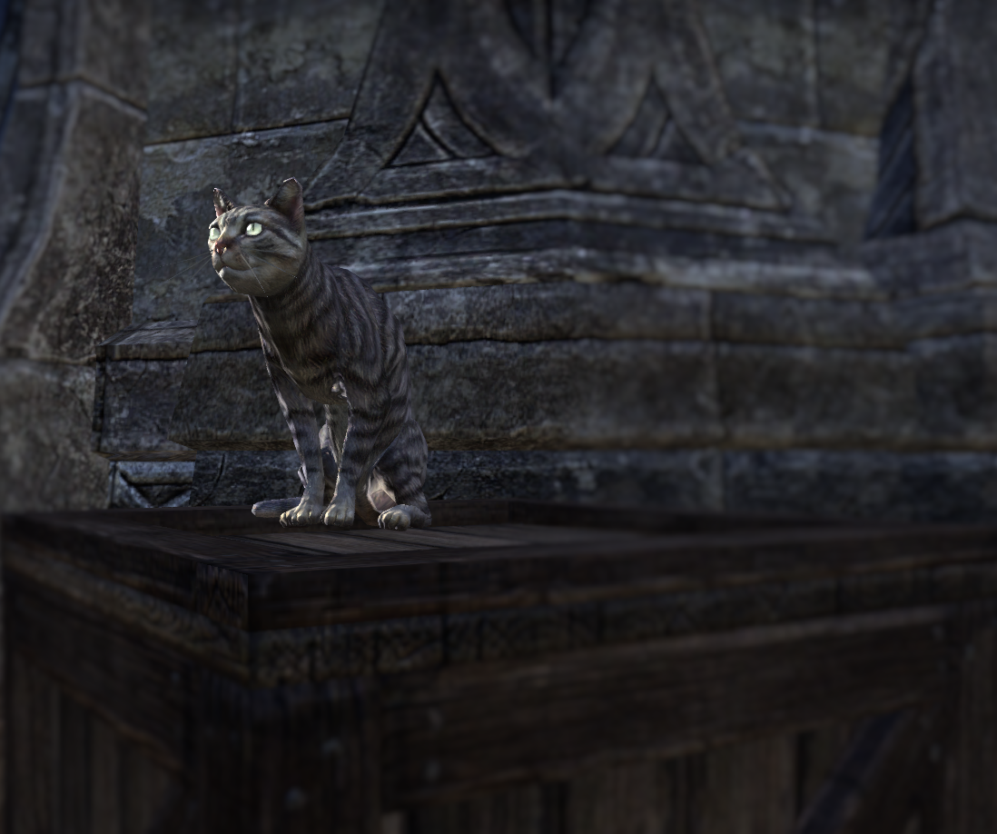 Azura (Cat)