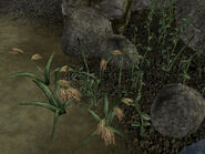 Прибрежная флора (TES III) 01