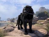 Black Senche-Lion