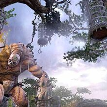 The Elder Scrolls Online 1.jpg