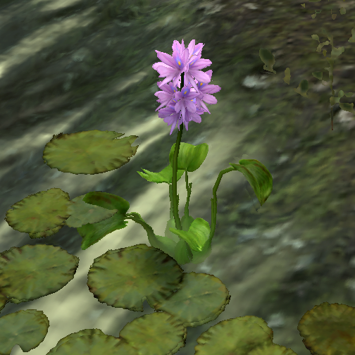 Water Hyacinth (Online)