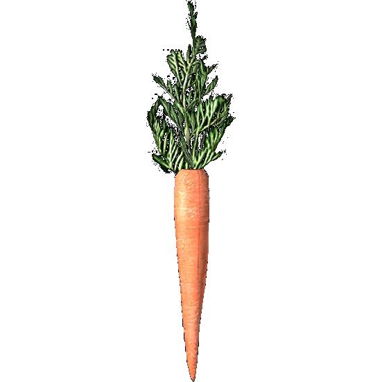 Морковь (Skyrim)