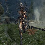 Matrona wił (Skyrim)