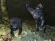 Медвежья услуга (Skyrim)