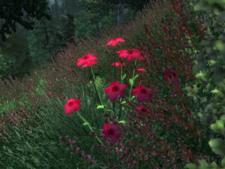 Красный лен