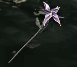 Belladama (Skyrim)