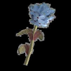 Голубой горноцвет.png