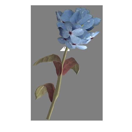 Голубой горноцвет (Skyrim)