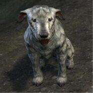 Barbas - Dog (Online)
