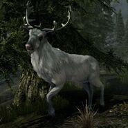 Biały Jeleń (Skyrim)