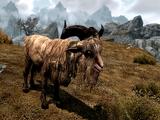 Cabra (Skyrim)