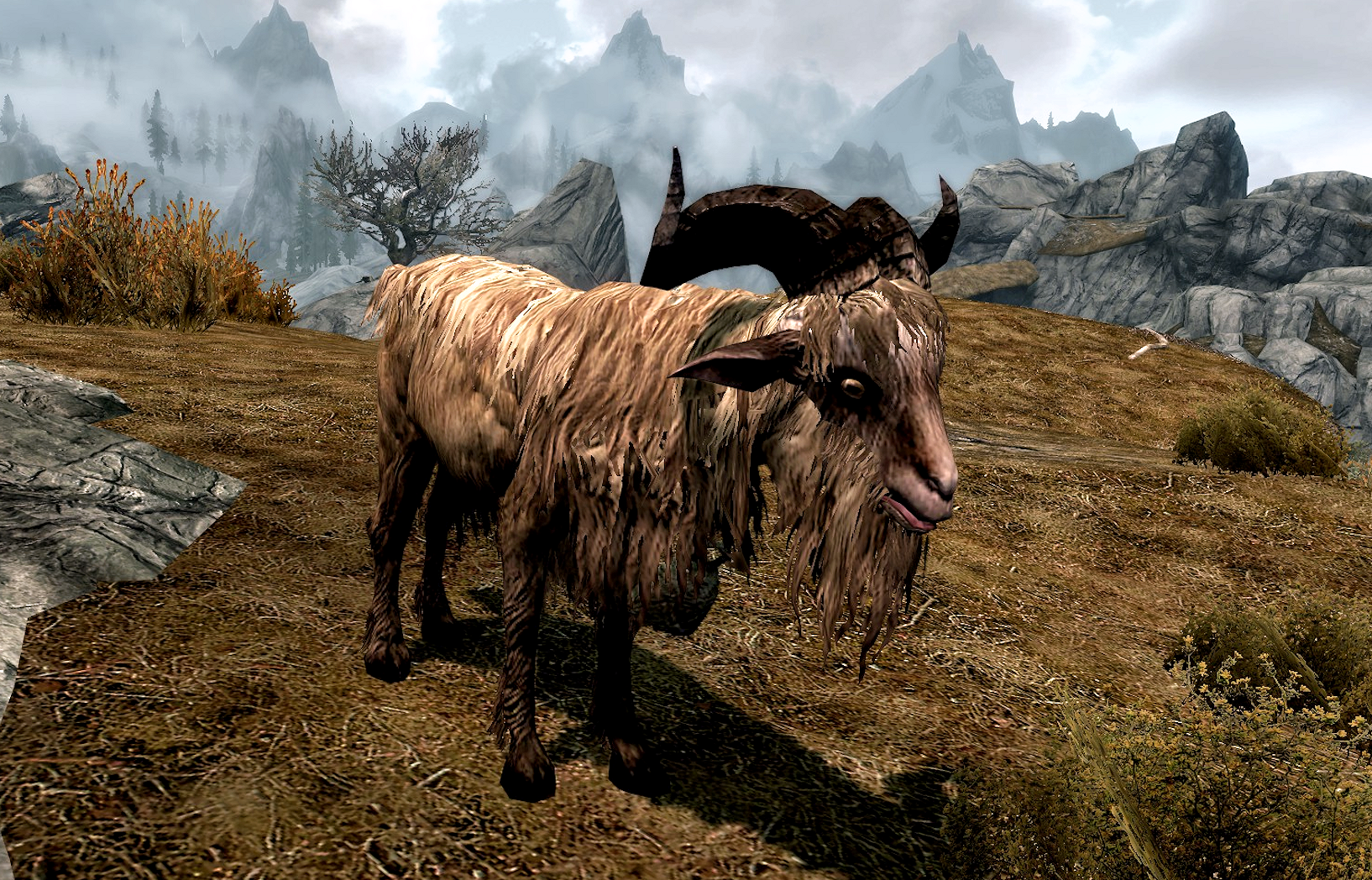 Gleda the Goat