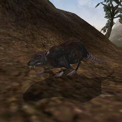 Крыса (Morrowind).jpg