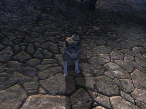 Волк (Oblivion) 2