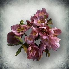 Тимсовые цветы (Tribunal).png