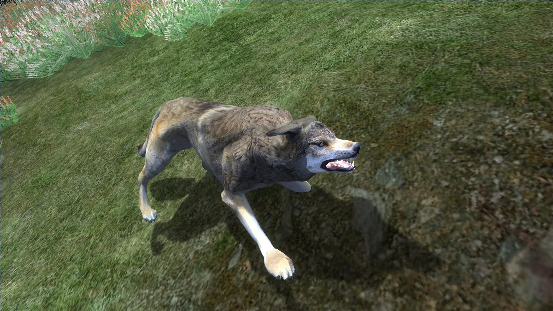 Wolf (Oblivion)
