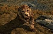 Sabre Cat Frontal